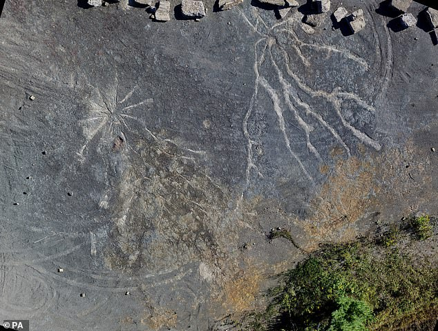The world's most oldest 'Fossil Forest' was simply Found in New York, And Its Magnificent