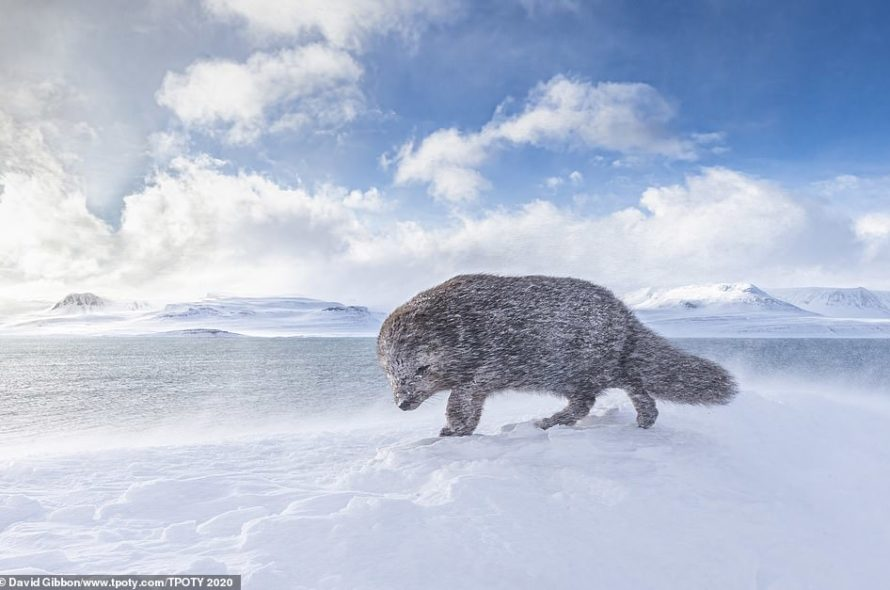 2020 Images uncovered, unbelievable travel photographer of the year